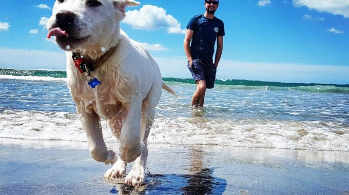 New Zealand's Best Dog-friendly​ Walks, Parks And Beaches!